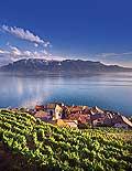 9393 - Photo : Suisse, canton de Vaud, vignoble de Lavaux en terrasses - Saint-Saphorin, Lac Léman