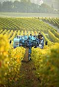 9837 - Photo : Suisse, vignoble de Genève - vendange en machine - Geneva, switzerland, swiss wines - wein, schweiz