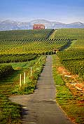 9840 - Photo : Suisse, vignoble de Genève, Dardagny - Geneva, switzerland, swiss wines - wein, schweiz