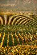 9848 - Photo : Suisse, vignoble de Genève, Dardagny - Geneva, switzerland, swiss wines - wein, schweiz