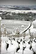 9861 - Photo : Suisse, vignoble de Genève, Dardagny sous la neige - Geneva, switzerland, swiss wines - wein, schweiz